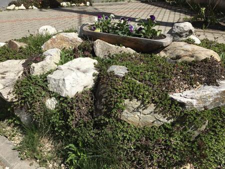 Szállás Csíkszentdomokos - Orhidea Panzió - Hargita Megye